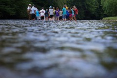 Students collect fish in the South Toe River